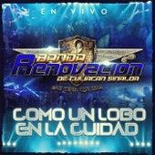 Como un Lobo en la Ciudad (En Vivo) by Banda Renovacion