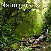 Play & Download Naturgeräusche: Regenwald by Entspannungsmusik | Napster