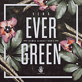 Evergreen by Vena