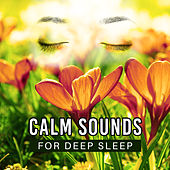 Calm Sounds for Deep Sleep – Soothing Waves, Calmness Dreaming, Mind Rest, New Age Music by Echoes of Nature