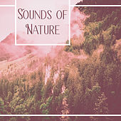 Play & Download Sounds of Nature – Relaxing Music, Nature Sounds, Relief Stress, Reduce Anxiety, Rest, Instrumental New Age by Native American Flute | Napster
