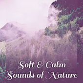 Soft & Calm Sounds of Nature – Rest & Relax, Easy Listening, New Age Relaxation, Soothing Sounds by Sounds of Nature Relaxation