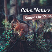Calm Nature Sounds to Relax – Nature Music, Forest Birds, Soothing Waves, Calming Music, New Age by Nature Tribe