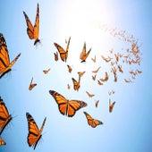 Butterflies by Zev