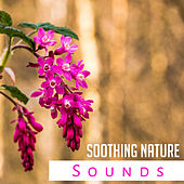 Soothing Nature Sounds – Soft Rain, Deep Relief, Serenity Music for Relaxation, Sounds of Water, Delicate Guitar, Zen by New Age