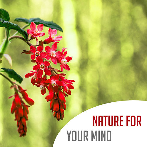Nature for Your Mind – Calming Music for Relaxation, Soothing Nature Sounds, Rain, Free Birds, Wind, Meditation, Zen, Stress Relief by Relaxation - Ambient