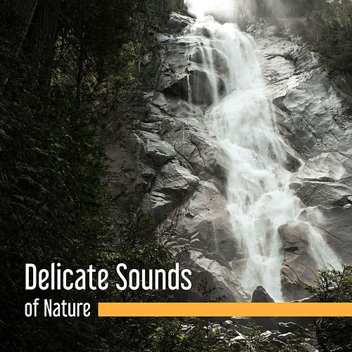 Delicate Sounds of Nature – Pure Relaxation, Soft Music to Calm Down, Just Relax, Deep Sleep, Piano Music, Meditation de ZEN