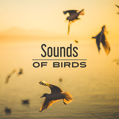 Sounds of Birds – Relaxing Therapy for Mind, Deep Sleep, Peaceful Music, Rest, Calmness, Relaxation, Harmony, Nature Sounds by Relaxation - Ambient