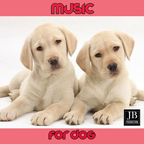 Music for Dog de Fly Project