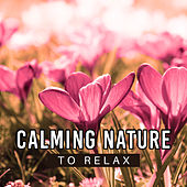 Calming Nature to Relax – Soft Waves, Relaxing Music, Easy Listening, Chilled Sounds by Nature Sound Series
