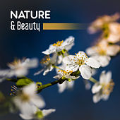 Nature & Beauty – Gentle Nature Sounds for Relaxation, Calm Down, Contemplation of Nature, Pure Mind, Singing Birds, Soothing Rain by Nature Sounds for Sleep and Relaxation