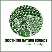 Soothing Nature Sounds for Study – Brain Power, Easier Learning, Soft Music, Stress Relief, Better Memory, Deep Concentration by Studying Music