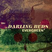 Evergreen - EP by Darling Buds