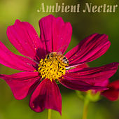 Ambient Nectar by Various Artists