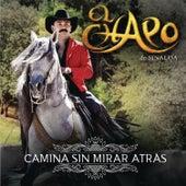Camina Sin Mirar Atrás by El Chapo De Sinaloa