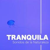 Musica Tranquila New Age con Sonidos de la Naturaleza by Various Artists