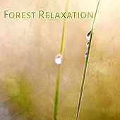 Forest Relaxation – Calming Birds Sounds, Chill in Forest, Soothing Waves, Rest & Relax, New Age Music by New Age