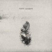 The Birds by Poppy Ackroyd