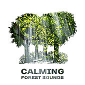 Calming Forest Sounds – Music to Relax, Sounds of Nature, Rest with New Age Songs by Relaxing