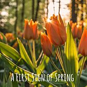 A First Sign of Spring by Meditation Music Zone