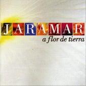A Flor De Tierra by Jaramar