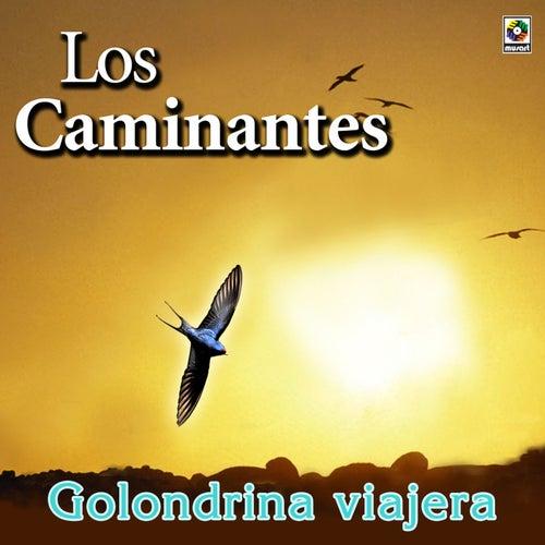 Play & Download Golondrina Viajera by Los Caminantes | Napster