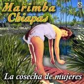 La Cosecha De Mujeres by Marimba Chiapas