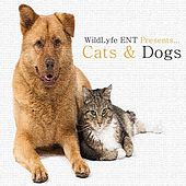 Chase The Cat by Cats and Dogs