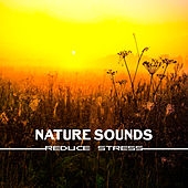 Nature Sounds Reduce Stress – Inner Healing, Tranquility, Soft Music to Calm Down, Relaxation, Stress Relief, Peaceful Mind by Calming Sounds