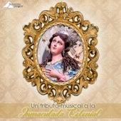 Un Tributo Musical a la Inmaculada Colonial by Banda Sacra Armonía
