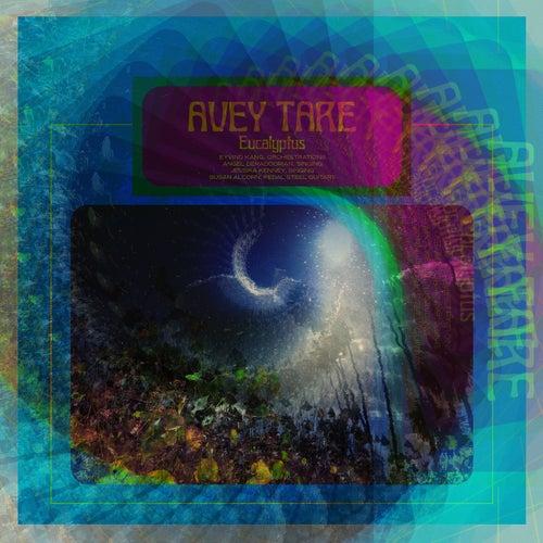 Eucalyptus by Avey Tare
