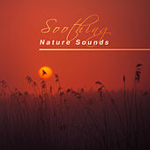 Soothing Nature Sounds – Calming Rain, Peaceful Healing Water, New Age Music, Sounds to Relax by Calming Sounds