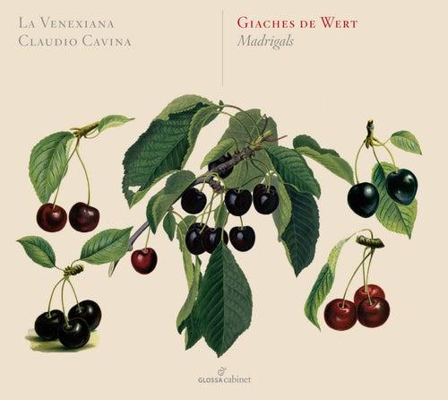 Wert: Madrigals by La Venexiana