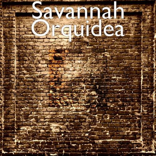 Orquidea by Ben Watt