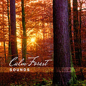 Calm Forest Sounds – Soothing & Relaxing New Age Music, Nature Sounds to Rest, Ambient Waves by Nature Sounds Relaxation: Music for Sleep, Meditation, Massage Therapy, Spa