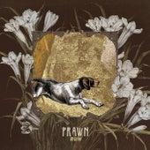 Greyhound von Prawn