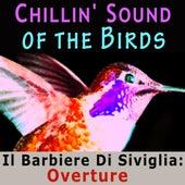 Chillin' Sound of Birds von Various Artists