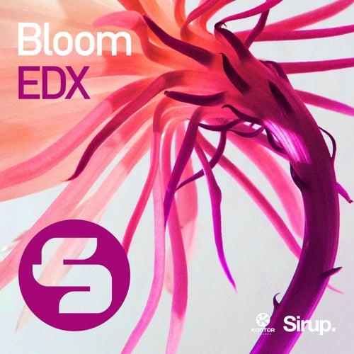 Bloom von EDX