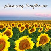 Amazing Sunflowers by Nature Sounds