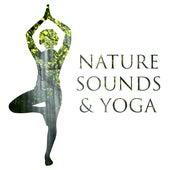 Nature Sounds & Yoga – Deep Meditation, Chakra Balancing, Hatha Yoga, Relaxation, Soft Mindfulness, Deep Sleep by Meditation Spa