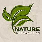 Nature Relaxation – Music to Calm Down, Soft Sounds of Nature, Walk in the Forest by Bird Sounds