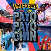Payo Payo Chin von The Waterboys