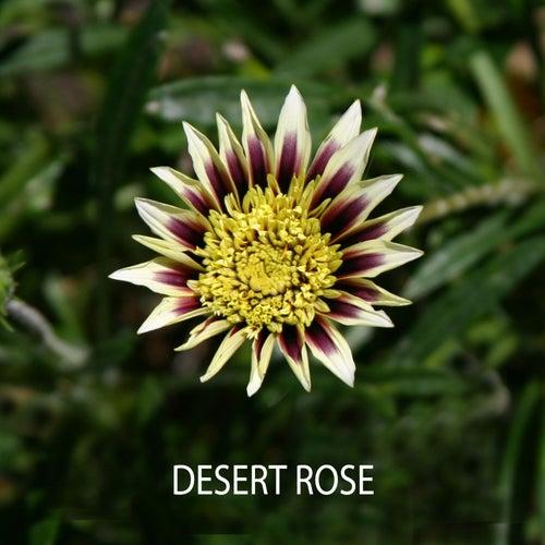Desert Rose by Matt Campbell