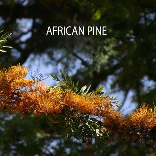 African Pine by Matt Campbell