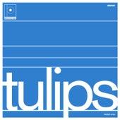 Tulips by Maston