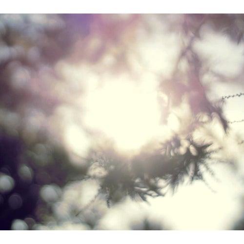 In.florescencia by Suria