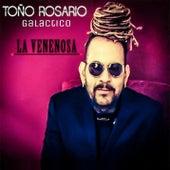 La Venenosa by Toño Rosario