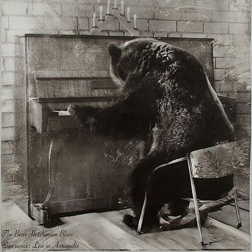 The Bear Hutchinson Blues Experience: Live in Annapolis by Bear Hutchinson
