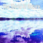 The World Of Nature by Massage Therapy Music