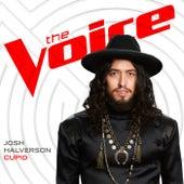 Cupid (The Voice Performance) by Josh Halverson